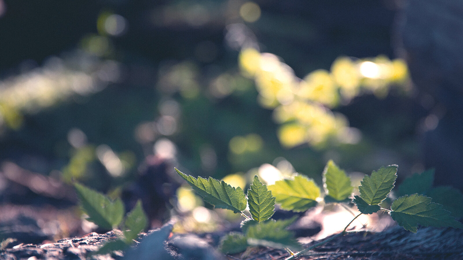 Close up of tiny branch with green leaves